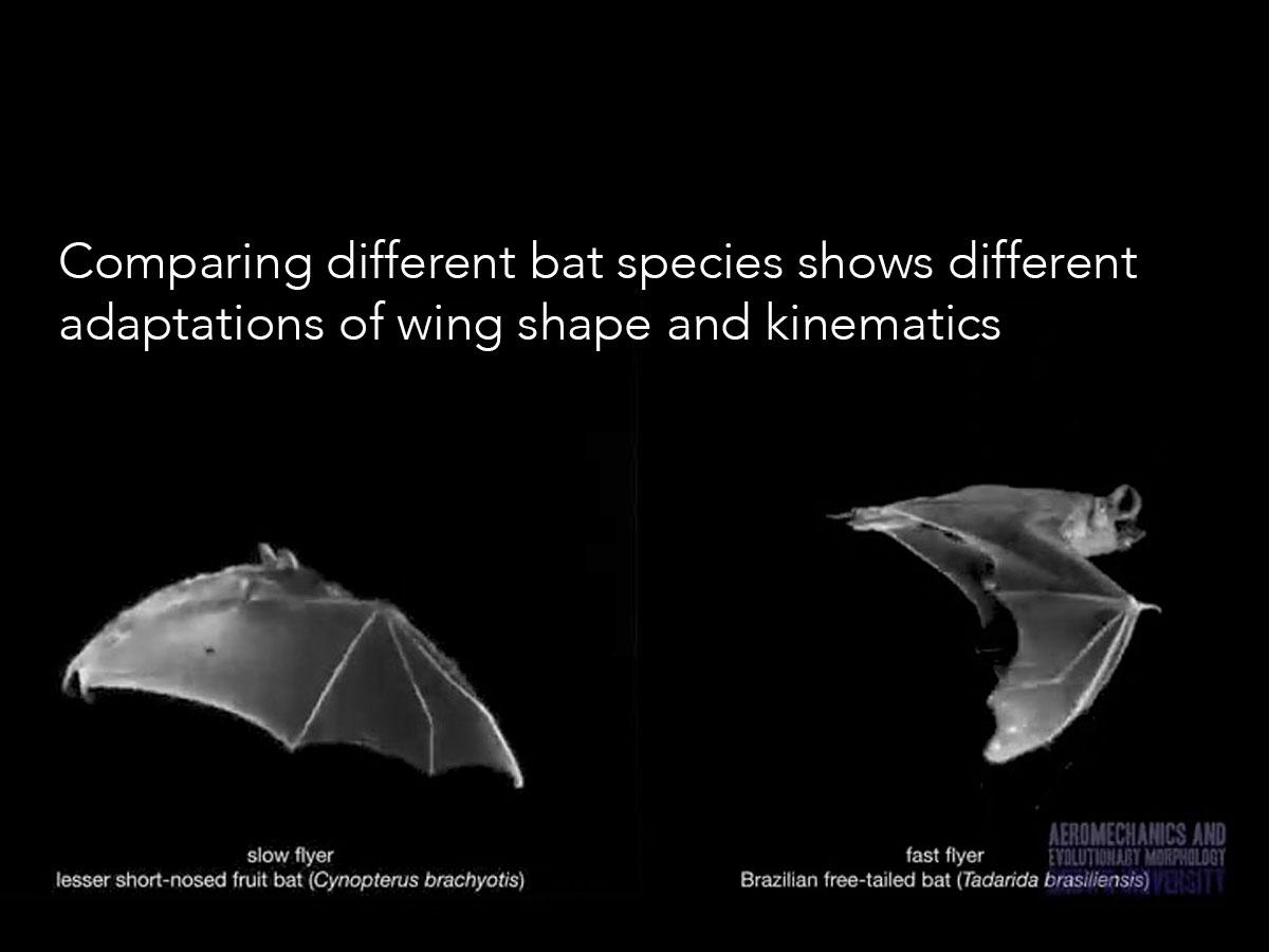 Aeromechanics and Evolutionary Morphology | Department of Ecology ...