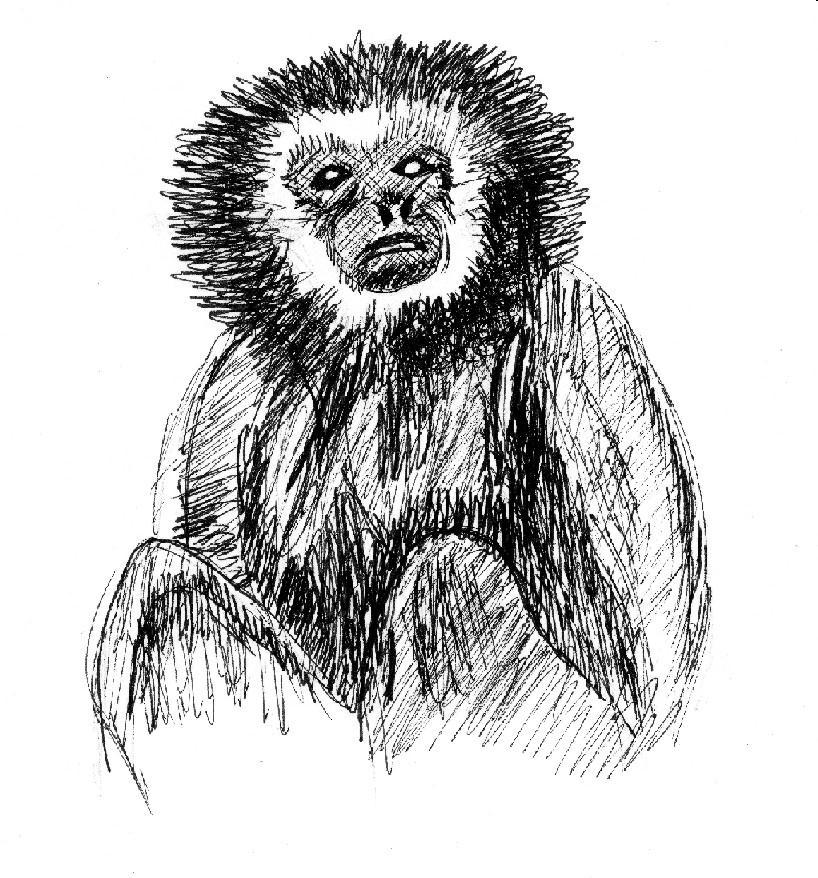 laboratory primate newsletter  volume 44  number 1