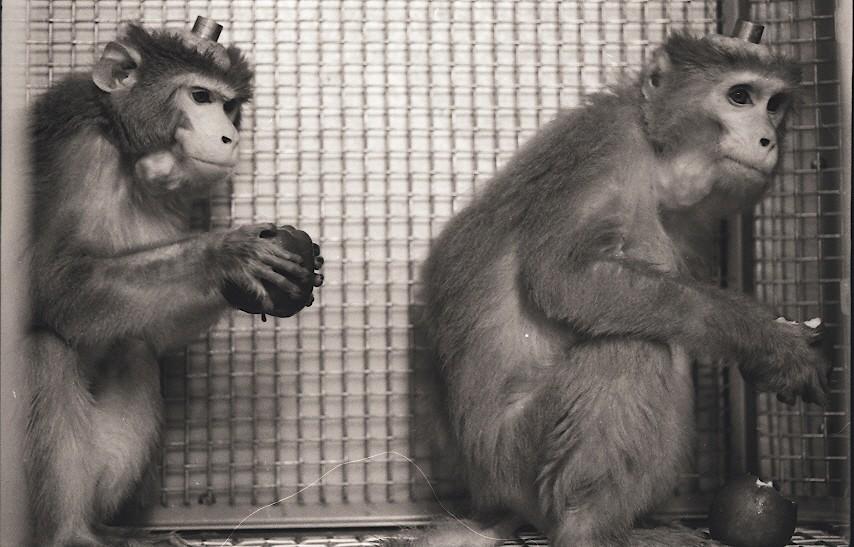 Laboratory Primate Newsletter Volume 48 Number 2