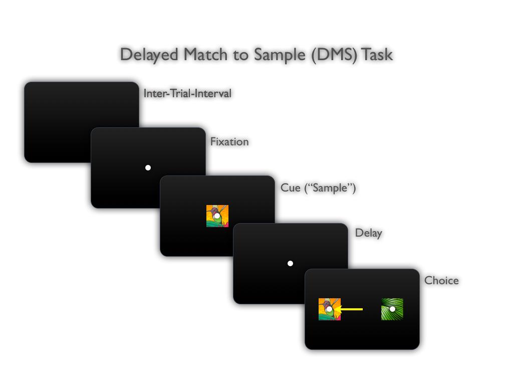 MonkeyLogic - Example Task
