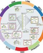 Big Data and genetic complexity: