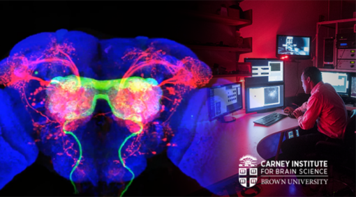 $100 million gift to endow Carney Institute for Brain Science