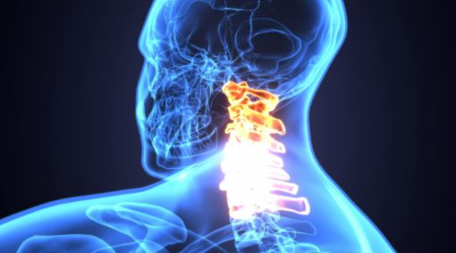 spinal cord graphic