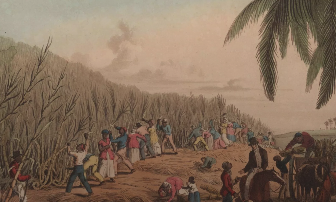 painting of slaves cutting sugar cane