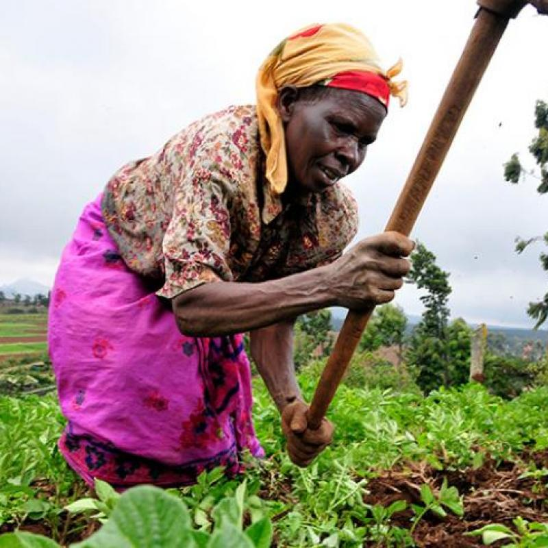 African woman gardening
