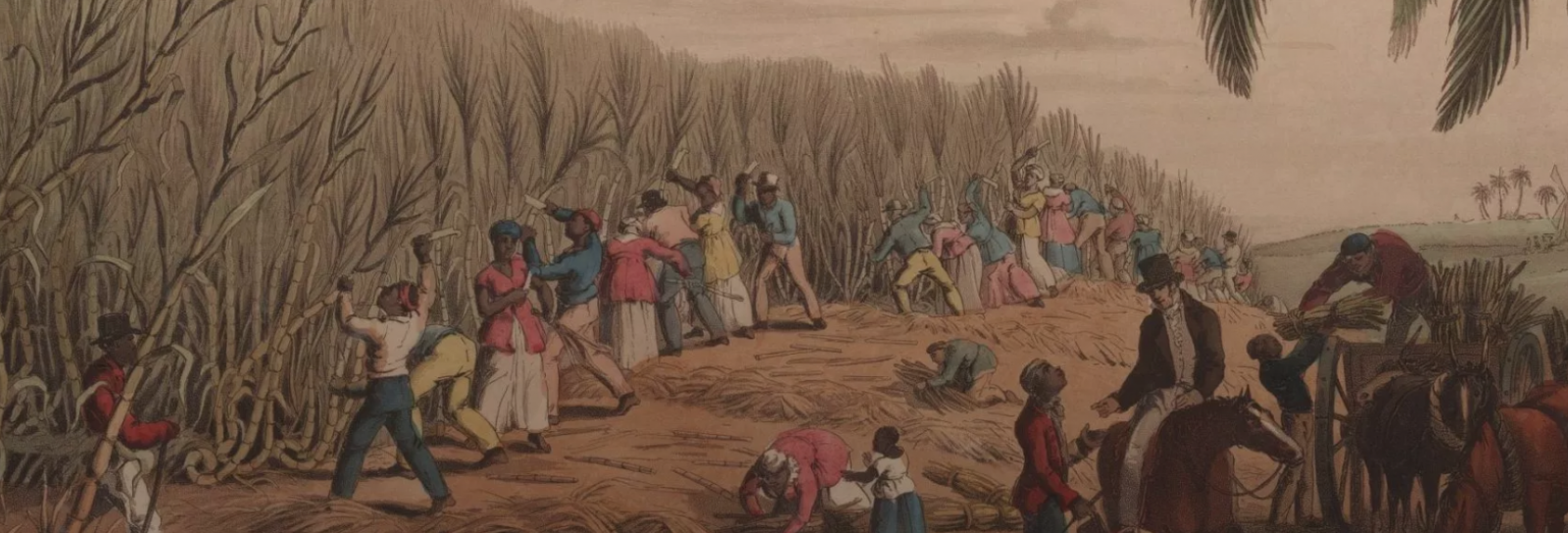 old image of slaves cutting sugar cane