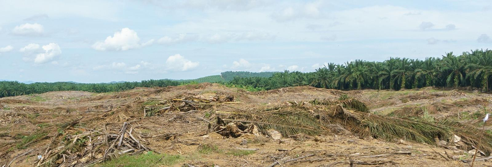 deforested land