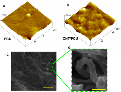 Figure AFM surface topography of a) Poly carbonate urethane (PCU) and b) carbon nanotube/CPU composite surfaces. c) FESEM image of CNT/PCU composites (bar is 500nm). d) Magnified image clearly showed individual CNTs coated with PCU (bar is 100 nm).