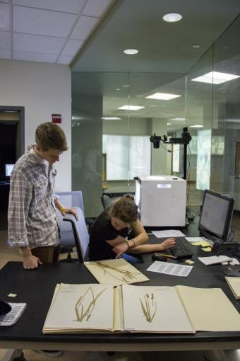 Miranda Norlin ('17) and Sam Wickham ('14) digitizing specimens in the Brown University Herbarium