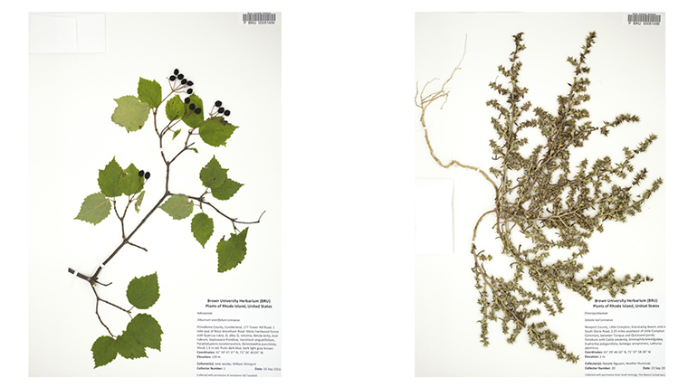 The Herbarium Is Comparable To A Library Of Preserved Plants With Specimens And Labels Providing All Information In Fact Label Specimen