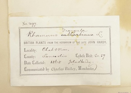 This collection of Rhamnus frangula was collected in Chat Moss, Lancashire, England in 1868 by John Hardy