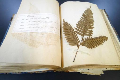 Bound herbarium of ferns and mosses collected in Assam by J. C. Simons