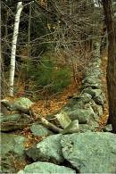 Photo credit: David Foster, Harvard Forest