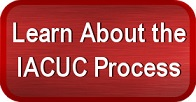 Click Here to Learn About the IACUC Process