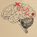 Neural Data